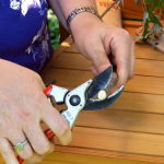 Choosing the best pruners for arthritic hands